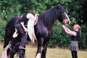 Продолжительность жизни лошадей 8
