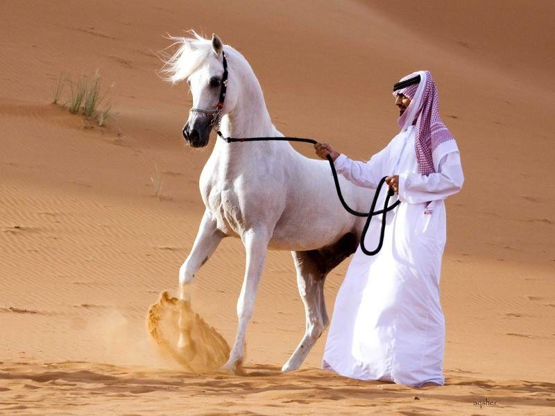 Скорость лошади средняя и максимальная