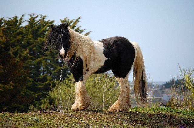 Случка лошадей 4