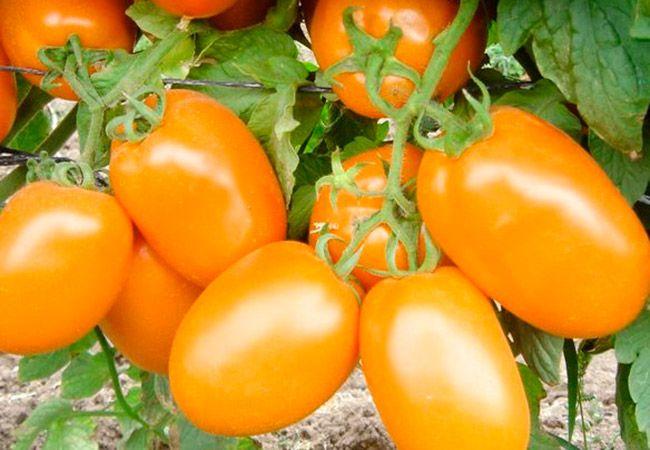 Де-Барао томат 4