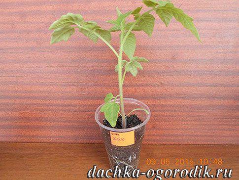 Де-Барао томат 18