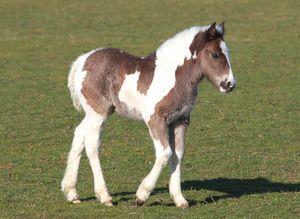Клички лошадей или как назвать коня и кобылу 2