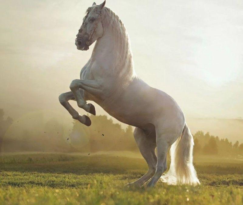 Клички лошадей или как назвать коня и кобылу 33