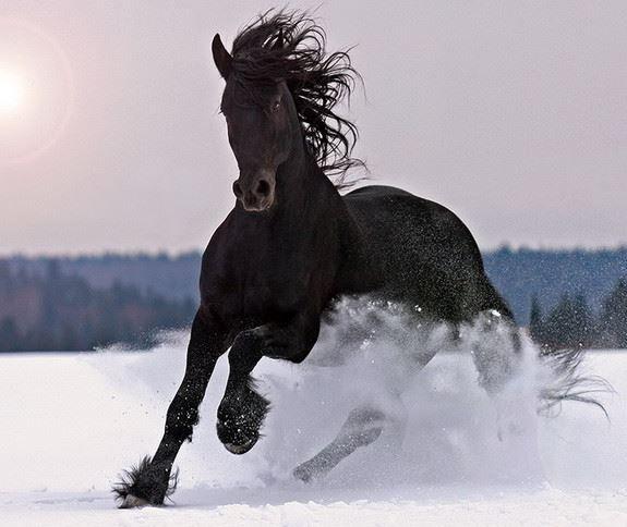Клички лошадей или как назвать коня и кобылу 12