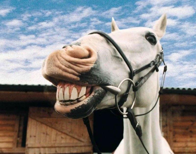 Клички лошадей или как назвать коня и кобылу 35