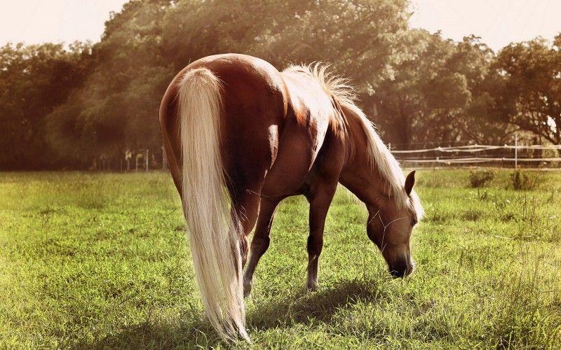 Клички лошадей или как назвать коня и кобылу 36
