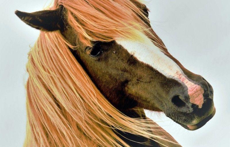 Клички лошадей или как назвать коня и кобылу 37