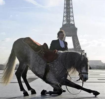 Клички лошадей или как назвать коня и кобылу 14
