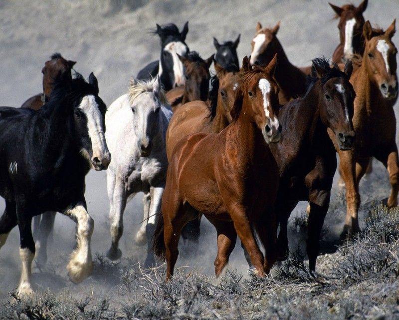 Клички лошадей или как назвать коня и кобылу 40