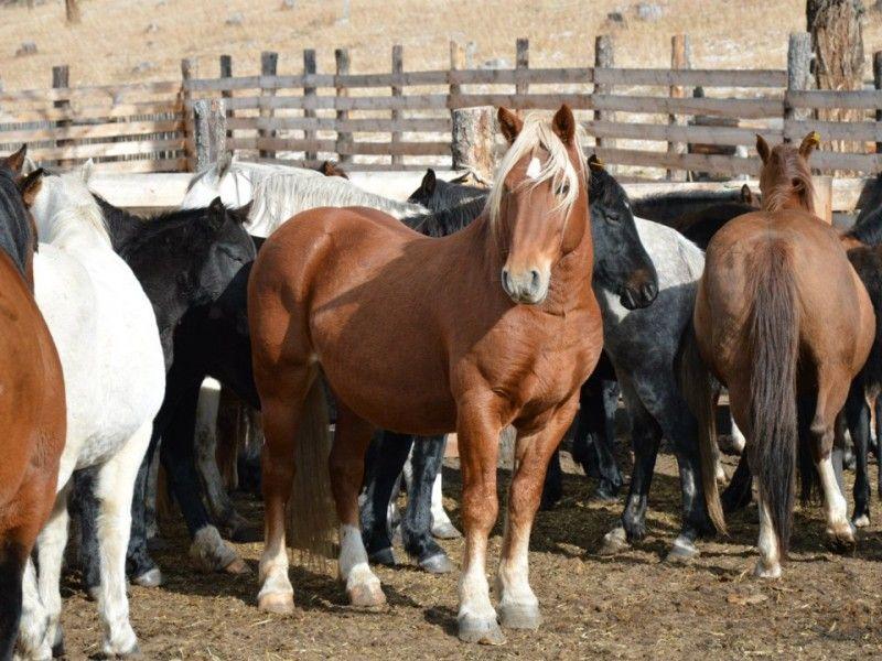Клички лошадей или как назвать коня и кобылу 41
