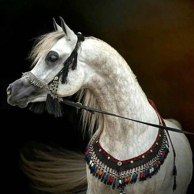 Клички лошадей или как назвать коня и кобылу 44