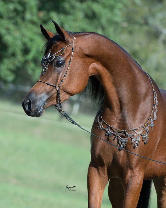 Клички лошадей или как назвать коня и кобылу 8