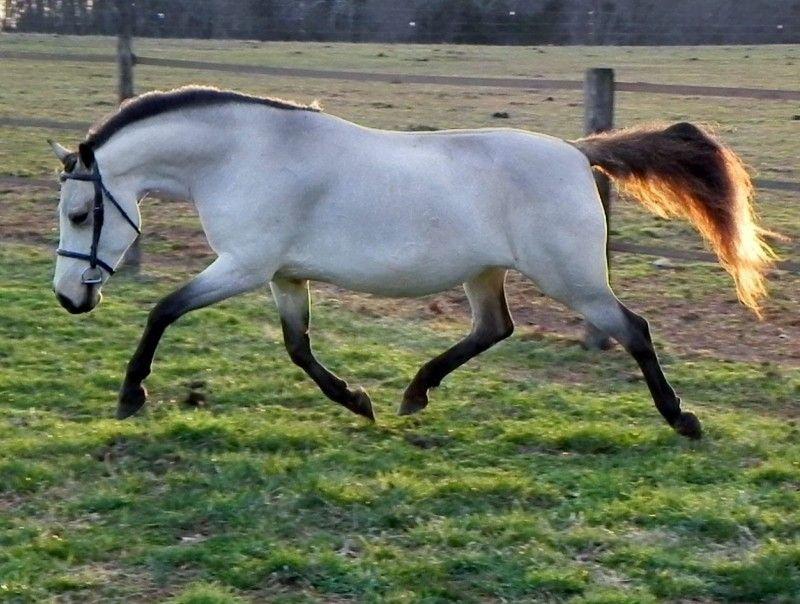 Клички лошадей или как назвать коня и кобылу 47