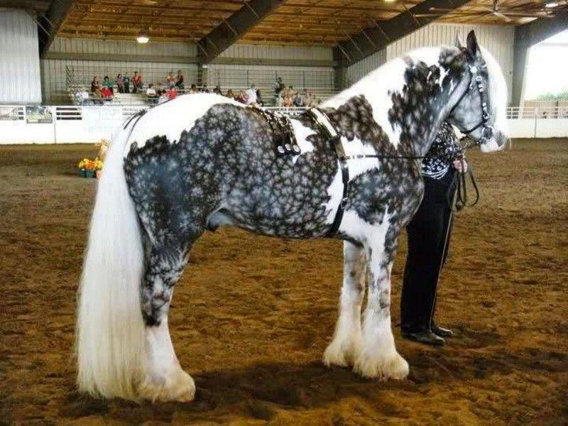 Клички лошадей или как назвать коня и кобылу 50
