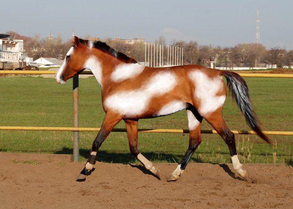 Клички лошадей или как назвать коня и кобылу 9