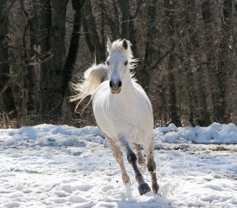 Клички лошадей или как назвать коня и кобылу 53