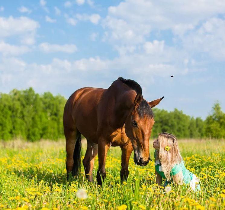 Клички лошадей или как назвать коня и кобылу 23