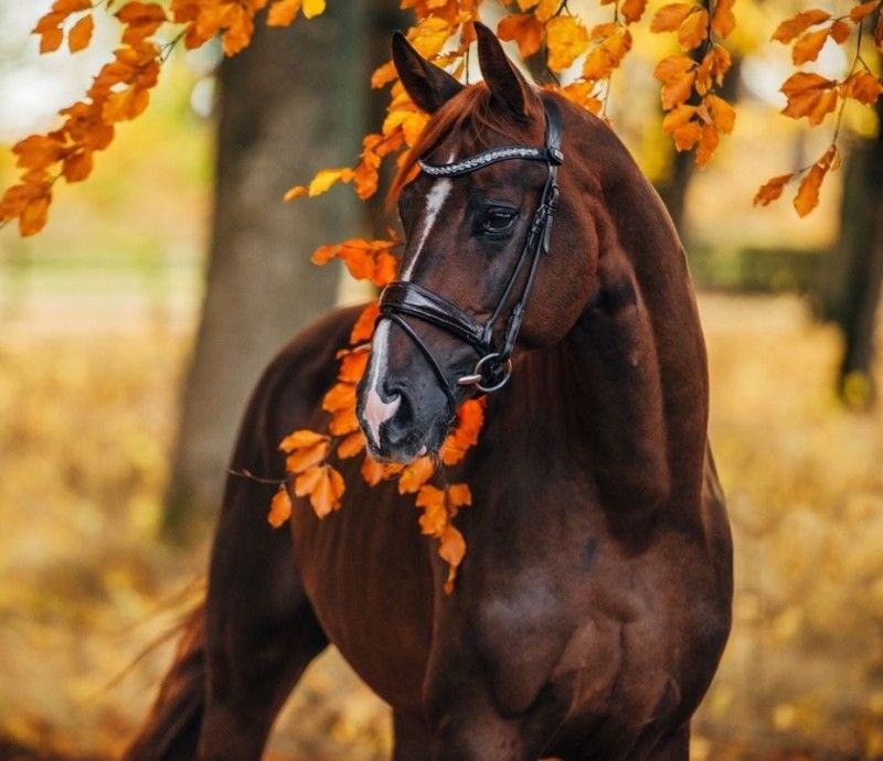 Клички лошадей или как назвать коня и кобылу 56