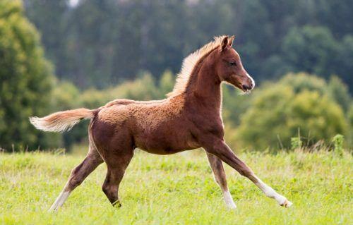 Клички лошадей или как назвать коня и кобылу 10