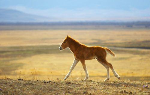 Клички лошадей или как назвать коня и кобылу 26
