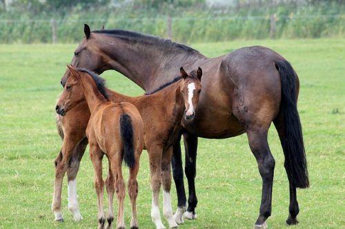 Клички лошадей или как назвать коня и кобылу 11