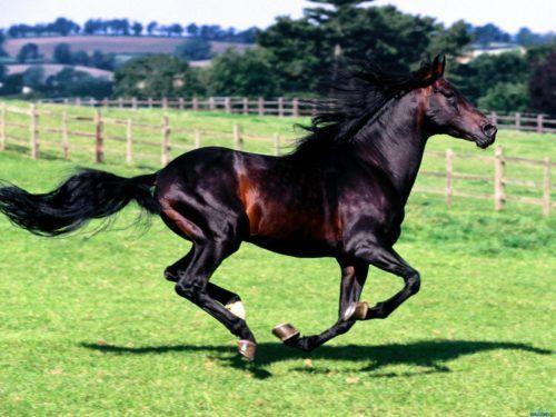 Клички лошадей или как назвать коня и кобылу 29