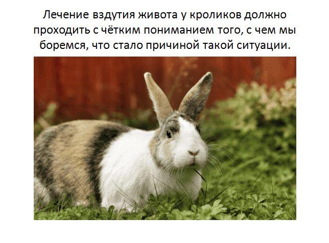 Вздутие живота у кроликов причина и лечение 1