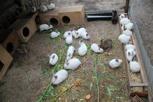 Вздутие живота у кроликов причина и лечение 7